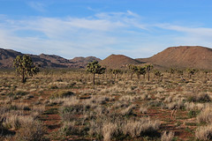 Joshua Tree National Park, California (russ david) Tags: joshua tree national park california ca yucca brevifolia landscape travel april 2019