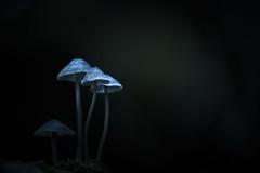 Mystique (micke.vmix) Tags: carlzeiss zeiss aposonnart2135 sonnar135f2zf d850 mushroom