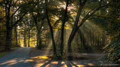 Sun Rays in the woods (BraCom (Bram)) Tags: 169 bracom bramvanbroekhoven gelderland nederland netherlands nunspeet october oktober autumn bomen boom bos fog foliage forest herfst landschap licht light mist morning nature natuur ochtend pad path schaduw shadow shadows sun sunrays sunrise tree trees widescreen woods zon zonnestralen zonsopkomst star ster goldenlight saariysqualitypictures