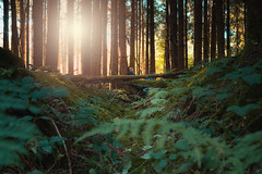 Chill out area. (Alfred Bold Photography) Tags: chillout area chilloutarea lounge nature entspannen spontan sun naturephotography sonya7 zeiss50mm farn graben green portrait selfie