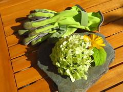 Gartenarbeit = Sonne, Wärme, Unkraut und schöne Fotomotive. Was will man mehr? (Bea tedo) Tags: hortensie kokardenblume blume blüte flower gartenhandschuhe garten grün green gelb yellow natur