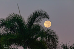 Morning Full Moon (Michael Seeley) Tags: florida fullmoon huntersmoon melbourne michaelseeley moon moonphases moonshot mikeseeley