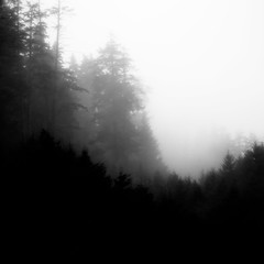 Forest In Fog 015 (noahbw) Tags: d5000 ecolastatepark nikon oregon pnw pacificnorthwest abstract blackwhite blackandwhite bw fog foggy forest landscape mist misty monochrome natural noahbw quiet sky spring square still stillness trees woods