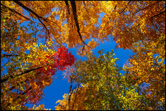 Algonquin Canopy (Rodrick Dale) Tags: algonquin canopy park autumn fall trees colour canada