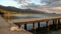 Lake Ohrid With Street Dog