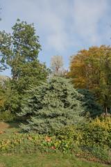 sDSC-8581 (L.Karnas) Tags: donaupark park autumn herbst vienna wien österreich austria 2019 donau danube oktober october