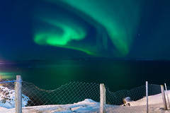 Aurora (urban requiem) Tags: islande island ice iceland aurore boréale aurora borealis auroraborealis auroreboréale nuit night color stykkisholmur