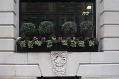 Neat (sianmatthews) Tags: 1finsburycircus 1925 britannichouse edwardlutyens london portlandstone olive oleaeuropaea cyclamen sowbread ivy hedera wintercherry solanumpseudocapsicum