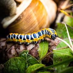 Caterpillar (Zeeyolq Photography) Tags: caterpillar