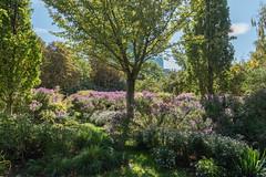 sDSC-8294 (L.Karnas) Tags: donaupark park autumn herbst vienna wien österreich austria 2019 donau danube oktober october