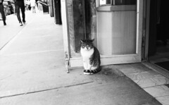 Jay Street (neilsonabeel) Tags: pentaxspotmaticf spotmatic pentax takumar blackandwhite cat feline bodegacat street brooklyn newyorkcity dumbo film analogue cats spotmaticf