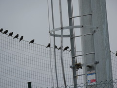 IMG_1710 (jesust793) Tags: estorninos pájaros birds naturaleza nature