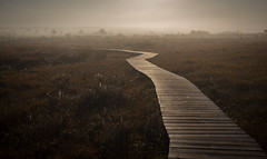 Getting bored? Follow the boardwalk (music_man800) Tags: boardwalk board walk hike outdoors outside exploring explore mysterious path road where leading distance vanishing point horizon mist fog moody eerie morning misty foggy sunrise haze yellow spider webs orange dawn autumn september 2019 early chilly sun bright light natural lighting landscape scene scenery canon 700d adobe lightroom creative cloud edit photography arty artistic thursley common nnr nature reserve hath surrey uk united kingdom bog
