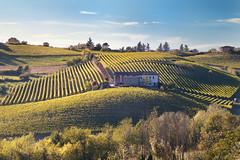 Monferrato (Paolo Paterlini) Tags: pentax landescape paesaggio piemonte vigneti monferrato