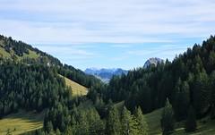 DSC02887 (Bergwandern Alpen) Tags: alpen alps bergwandern hiking oberalten kantonschwyz säntis