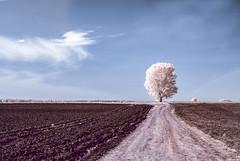 Alone / Egyedül (NeSa.) Tags: nopeople nature outdoors road landscape sky tree field plant environment ruralscene tranquilscene ir infrared 720nm ir720 national nikkor blue white nesa coth5 infravörös