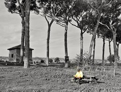 Relax nel parco (Manu&Manu67) Tags: parcodegliacquedotti parco parc panchina anziano lettura giornale roma rome verde archi oldman