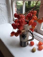 The Devon Guild Of Craftsmen (guyfogwill) Tags: boveytracey guyfogwill guy fogwill unitedkingdom flora flowers devon gbr england greatbritan october autumn flower thedevonguildofcraftsmen europe southwest uk 2019 gb sony dschx60 southofengland themill chineselantern physalisalkekengi 01626832223 tq139af