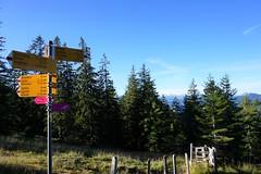DSC02658 (Bergwandern Alpen) Tags: alpen alps bergwandern hiking nüssen kantonschwyz wegweiser nadelwald firs signpost guidepost