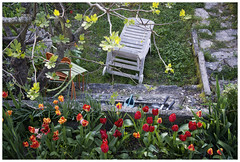 Reillane Provence (marc.demeuleneire) Tags: selecteren garden tulips france provence travel