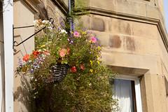at work (lozinka_gergova) Tags: sco scotland atwork flowers highlands sunny nikonlens nikon85mm nikon nikonphotography nikond610
