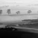 5 alberi nella nebbia