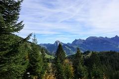 DSC02857 (Bergwandern Alpen) Tags: alpen alps bergwandern hiking chöpfenberg schiberg tierberg kantonschwyz bergwald herbst herbststimmung firs