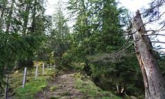 DSC02859 (Bergwandern Alpen) Tags: alpen alps bergwandern hiking bergwald wanderweg nadelwald totholz kantonschwyz zaun trail