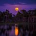 October Hunter's moon Full Moon over Webb Lake, Babcock Wildlife Management Area, Punta Gorda, Florida