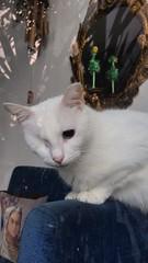 #meow  #escape ##eye ##blue ##cut#cute #ortaköy #istanbul #cat (gkc.rstk) Tags: meow escape eye blue cut cute ortaköy istanbul cat