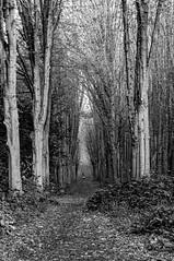 Rencontre. Sceaux, octobre 2019 (Bernard Pichon) Tags: sceaux hautsdeseine france bpi760 parc allée arbre forêt ballade automne fr92