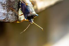 bug-a-boo (Daan Heijnen) Tags: bug autum macro colors colours landscape close up animal creature pretty beautiful bright