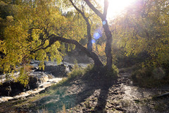 Rogie Falls (lozinka_gergova) Tags: sco scotland scenery rossshire rogiefalls nature naturephotography nikonlens nikon nikond610 nikkor24mm nikonphotography photography amateurophotography