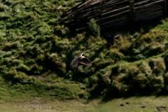 doonsooth (walter.innes) Tags: walterinnes stcyrus fungi bluebells hairycaterpillers kestrel buzzard springwatch