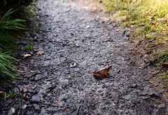 frog (lozinka_gergova) Tags: frogprince forest forestlife rogiefalls scotland highlands sco scenery nature beautiful naturephotography nikonlens nikkor24mm nikond610 nikonphotography photography amateurophotography