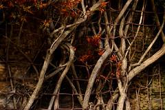 complex (lozinka_gergova) Tags: complex colours sco scotland outdoor nikonlens nikon nikon85mm nikonphotography