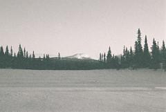 Gubbsjöklumpen (olovsebastian) Tags: film filmphotography analog analogue analoguephotography analogphotography ilfordsuperxp2400 ilfordxp2 xp2 nikon nikonf501