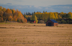 October eve (RdeUppsala) Tags: uppland uppsala höst otoño autumn ricardofeinstein fields forest campo landscape landskap light luz ljus woods paisaje countryside