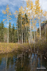 Dances With Wolves Film Site (kevin-palmer) Tags: blackhills blackhillsnationalforest fall autumn color colorful foliage october nikond750 morning southdakota filmsite danceswithwolves littlespearfishcreek flowing water stream savoy spearfishcanyon sunny blue sky tamron2470mmf28 reflection polarizer