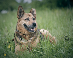 From an animal shelter – now she found a family (chribs) Tags: hund hunde portrait dog pet animal sony