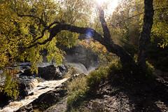 Rogie Falls (lozinka_gergova) Tags: nikonlens nikkor24mm nikon nikond610 nikonphotography photography amateurophotography sco scotland scenery nature naturephotography