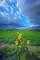 Freedom (Phil~Koch) Tags: life mood emotions country rural outdoors colors living heaven weather horizons lines landscape art meadow sky sunset clouds scenic vertical photography office portrait serene morning dawn nature natural environment inspired inspirational season beautiful hope love joy dramatic unity trending popular canon fineart arts shadow sun sunrise light peace wisconsin shadows endless earth sunlight horizon pastel yellow autumn flowers geese