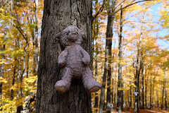 teddy (xophe_g) Tags: x100f quebec easterntownships sutton teddybear autumn