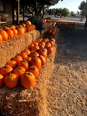 Pumpkins! (AGSEM1976) Tags: pumpkin sorghum crop harvest 2019 agsem socal vista ca 92083 local homegrown kids tractorshow fair trackortreat october fall autumn aesthetic show openhouse wagon agriculture california sandiego event shadows green orange sky nature outside fun red blue hay crate countryside gold life flickr colors day light flowers people family garden familyfun sun plants