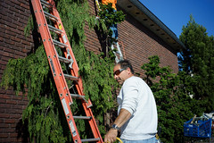 Ladders (dtanist) Tags: nyc newyork newyorkcity new york city sony a7 7artisans 35mm brooklyn gravesend ladders worker working building shrubs sunglasses