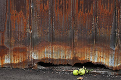 Giving Thanks- Garage Series (Doris Burfind) Tags: garage laneway alley toronto uban urbex city downtown street rust apple fruit metal weathered decay