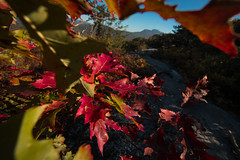Flat Rock Overlook, Grandfather Mountain Framed (Zach Frailey) Tags: blowingrock blueridgeparkway boone westernnc lenoir foliage pisgah pisgahnationalforest canon 5d mkiv 5dmarkiv 5dmkiv