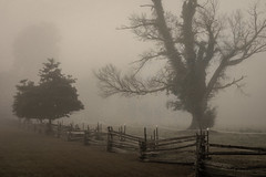 Whitehall Estate (Nature as Art Photography) Tags: annapolis maryland