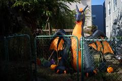 Dragon (dtanist) Tags: nyc newyork newyorkcity new york city sony a7 7artisans 35mm brooklyn gravesend halloween dragon inflatable decoration lawn fence