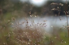 Impression (Stefano Rugolo) Tags: stefanorugolo pentax k5 pentaxk5 kmount smcpentaxm50mmf17 manualfocuslens manualfocus manual impression bokeh depthoffield abstract sweden